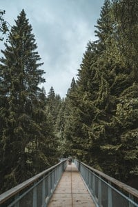 Walkway in the trees