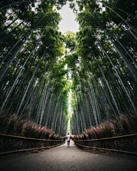 Well preserved forest